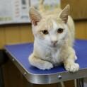 動物病院で保護され幸せを待っています(^o^)