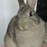 Thumper (サンパー)
