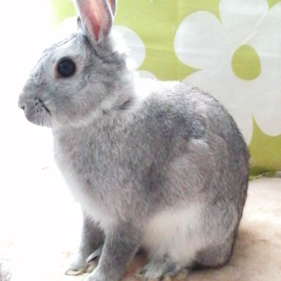 Thumper (サンパー)のカバー写真