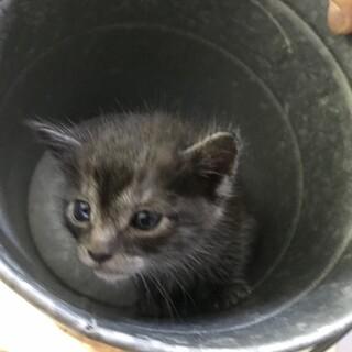 可愛い子猫の里親募集中です。