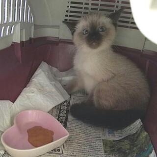 お問い合せを頂きました。メス子猫・血液検査(-)