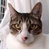 とても人懐っこいオス猫です。里親になってください。