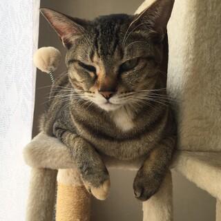 家猫修行中! 片手クリームパン マロ♀
