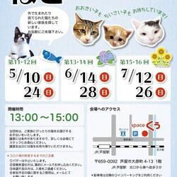猫の譲渡会in芦屋  サムネイル1