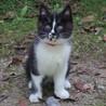 子猫(生後二か月半)の里親を探しています。