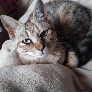 可愛いキジトラ子猫