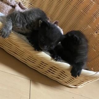 子猫(黒猫1匹)