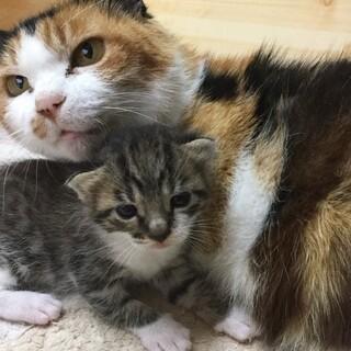 保護した三毛猫です
