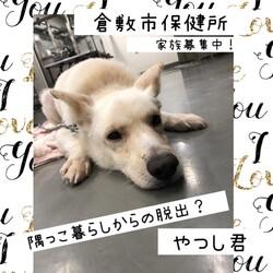 倉敷市保健所野犬の馴らし、さらしものの刑?!