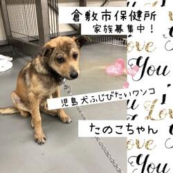 「倉敷市保健所野犬の馴らしさらしものの刑→全頭卒業!」サムネイル3