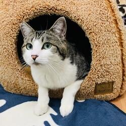 『保護猫のずっとのお家探し里親会』 サムネイル2
