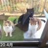 三毛猫シスターズと黒猫くん