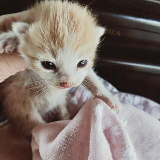 目があいたばかりの子猫です