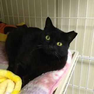 ビビリの黒猫を幸せにして貰えませんか?