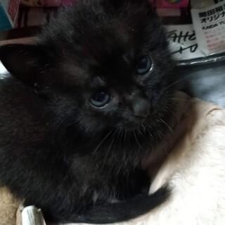 4/23生まれ、ちっちゃかわいい5匹のネコたちです