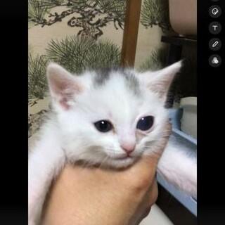 クリ♡4/10頃生まれの白猫