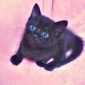 1ヶ月位 黒猫兄妹  可愛い月ちゃん!