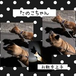 「倉敷っ子たのこちゃんお泊り保育一日目→譲渡決定!」サムネイル2