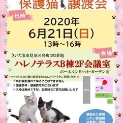 【開催中止】6/21(日)さいたま市見沼区ハレノテラス保護猫譲渡会 サムネイル1