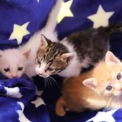 【開催中止】6/21(日)さいたま市見沼区ハレノテラス保護猫譲渡会 サムネイル2