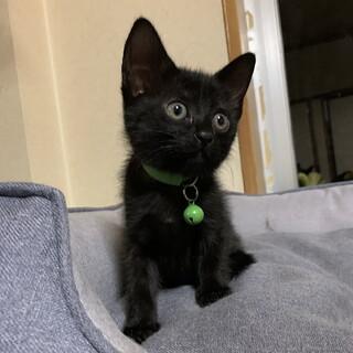 黒猫の子猫、みどりちゃん