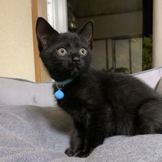 黒猫の子猫、あおちゃん