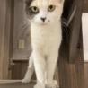 薄三毛の美猫アンバーちゃん  サムネイル2