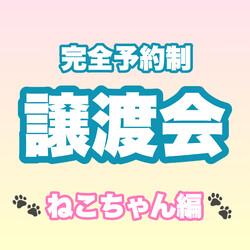 完全予約制 譲渡会(ねこちゃん編)