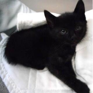 里親様に迎えられました。子猫 黒030