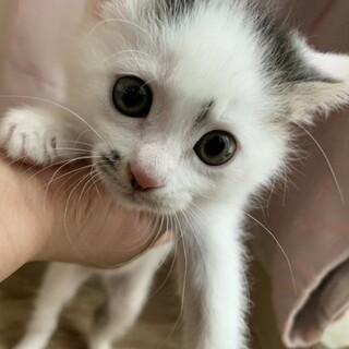 甘えん坊で可愛い子猫の花ちゃん♀