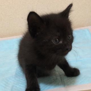 お寺の境内で保護した猫から生まれた子猫(2/4匹)