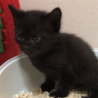 お寺の境内で保護した猫から生まれた子猫(2/4匹) サムネイル2