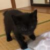お寺の境内で保護した猫から生まれた子猫(2/4匹) サムネイル3