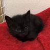 お寺の境内で保護した猫から生まれた子猫(2/4匹) サムネイル4