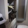 やんちゃな美人猫☆ティティ サムネイル5