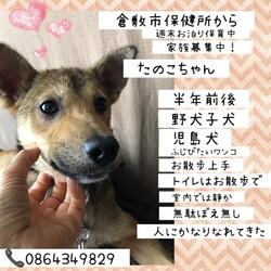 「倉敷っ子たの子ちゃんお泊り保育二日目→譲渡決定!」サムネイル1