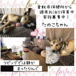 「倉敷っ子たの子ちゃんお泊り保育二日目→譲渡決定!」サムネイル3