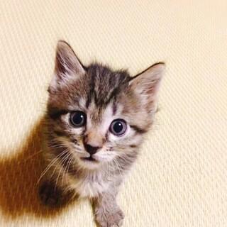 甘えん坊なキジ猫ちゃん