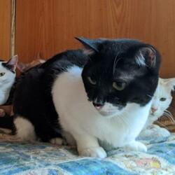 【開催中止】相模大野駅前北口デッキ♪猫の譲渡会♪ サムネイル1