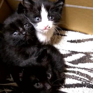 子猫3匹の里親募集です