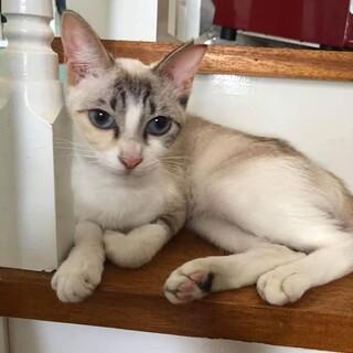 小顔の美猫 イチゴちゃん!