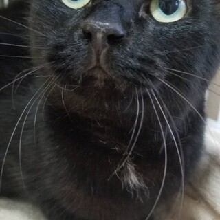 黒猫リオ♂下半身麻痺あり