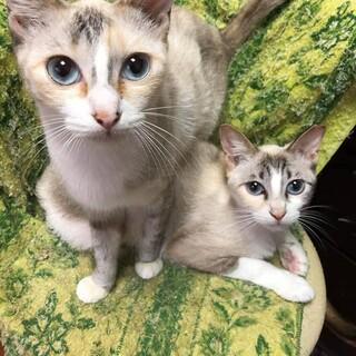 美猫姉妹 リップちゃん!