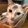 美猫姉妹 リップちゃん! サムネイル2
