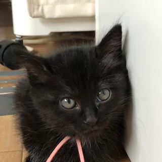 黒猫の女の子、激カワのさくらちゃん