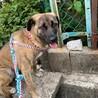 9か月 穏やかな性格 かわいい子犬メス  サムネイル3