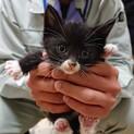 靴下柄が可愛いオス子猫