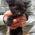 可愛い黒子猫オス