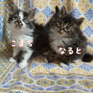 千葉県白井市/かわいい兄妹です