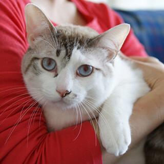 容姿端麗おっとり猫★ポワロ君